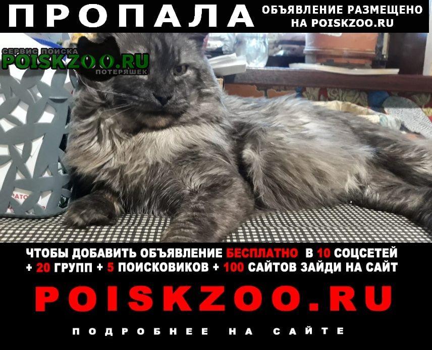Пропал кот Краснодар