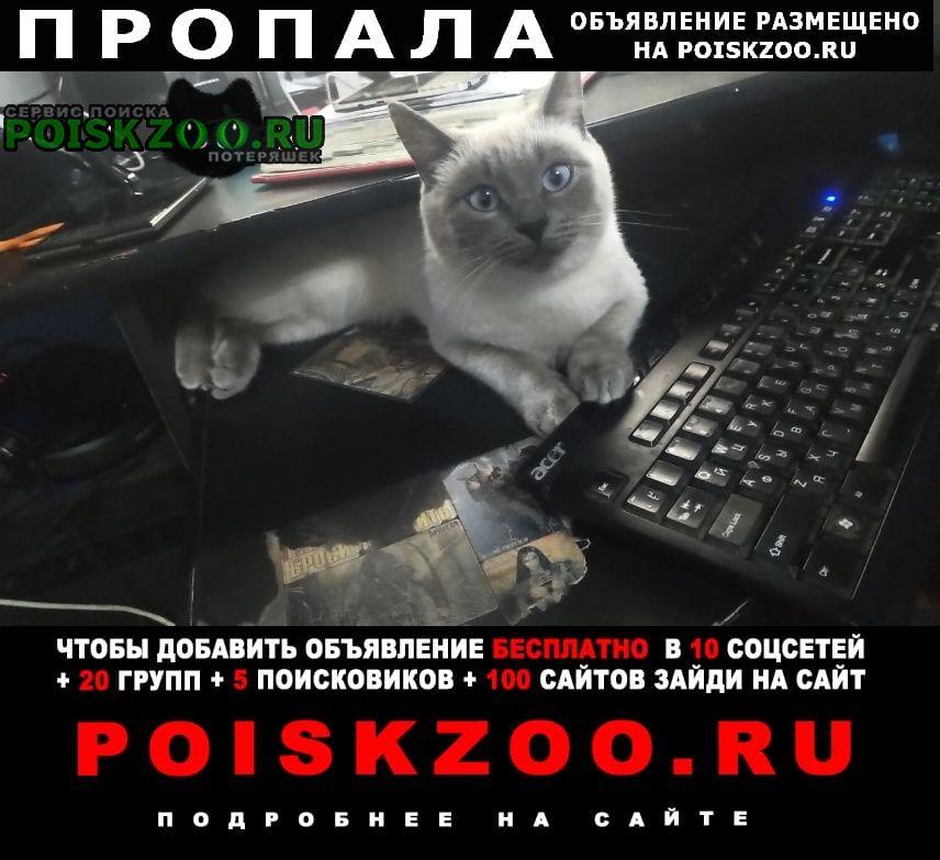 Пропала кошка Апрелевка