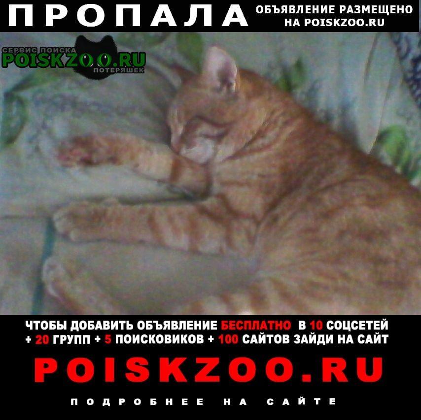 Пропал кот Саратов