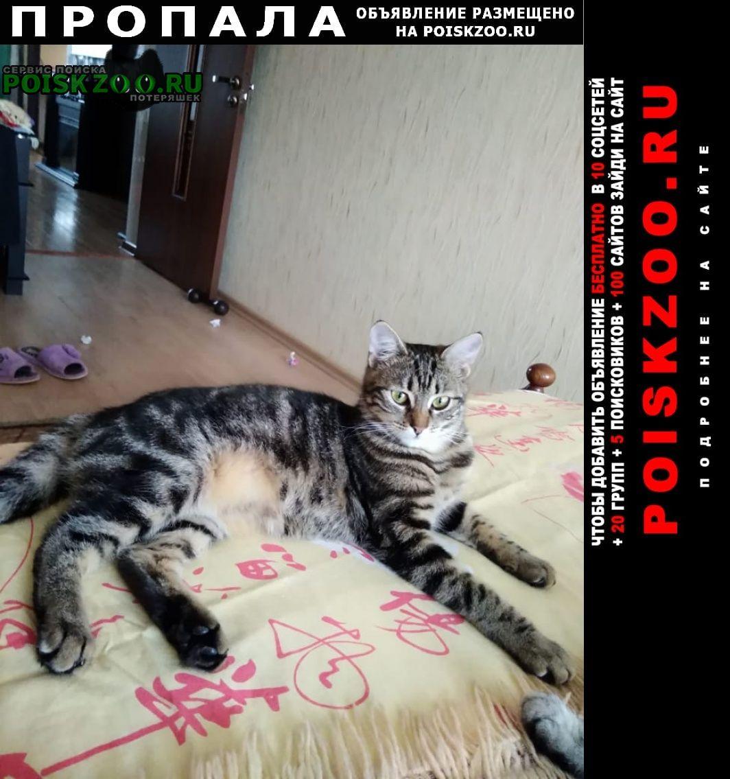 Пропала кошка Шахты