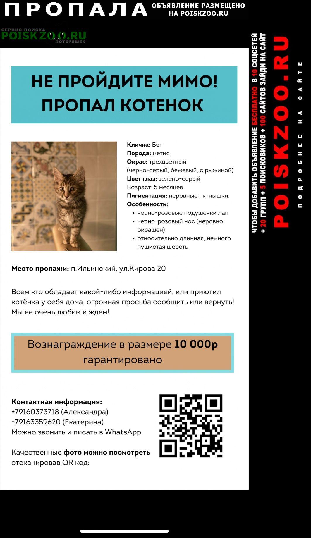 Пропала кошка котёнок. отзовитесь Ильинский (Московская обл.)
