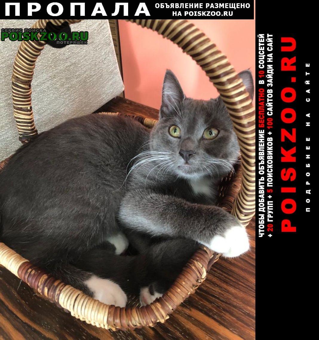 Пропала кошка серый котёнок Москва