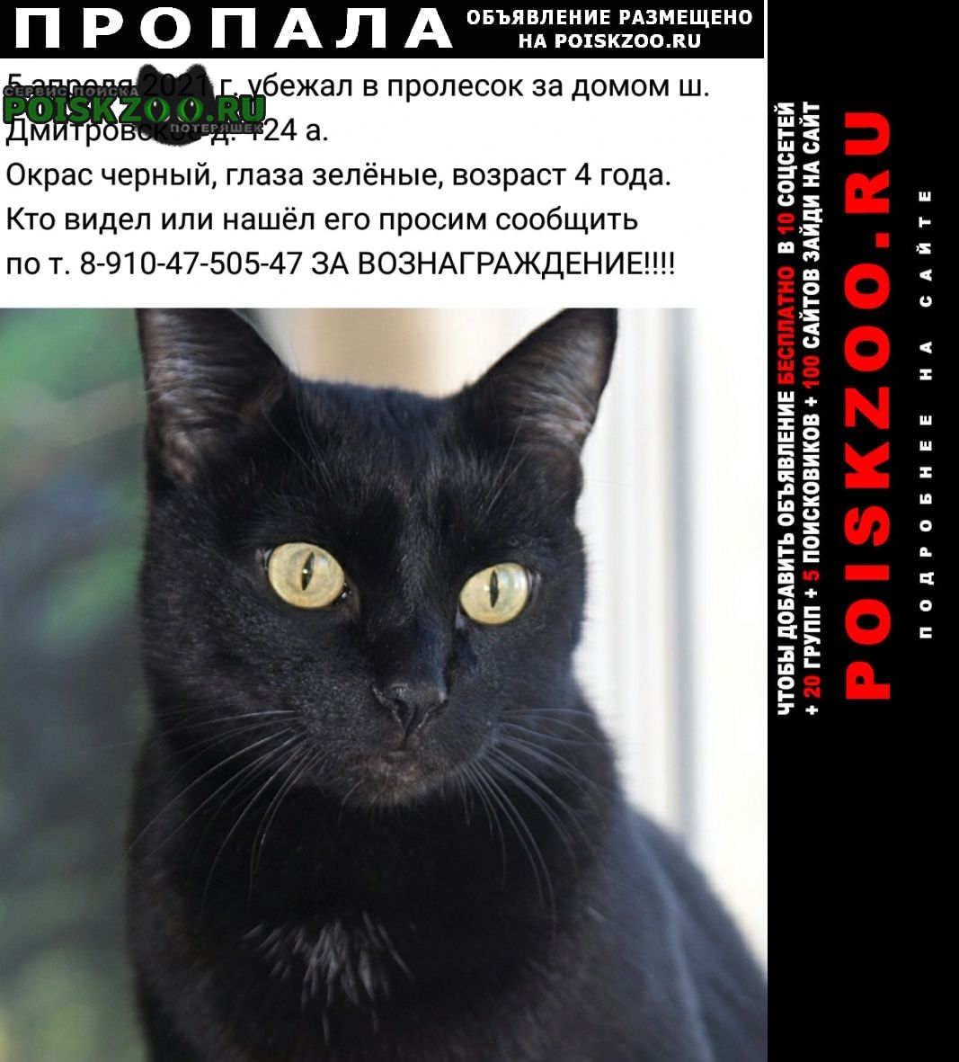 Москва Пропал кот просим помощи в поисках