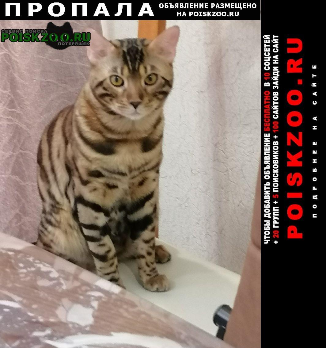 Кемерово Пропал кот