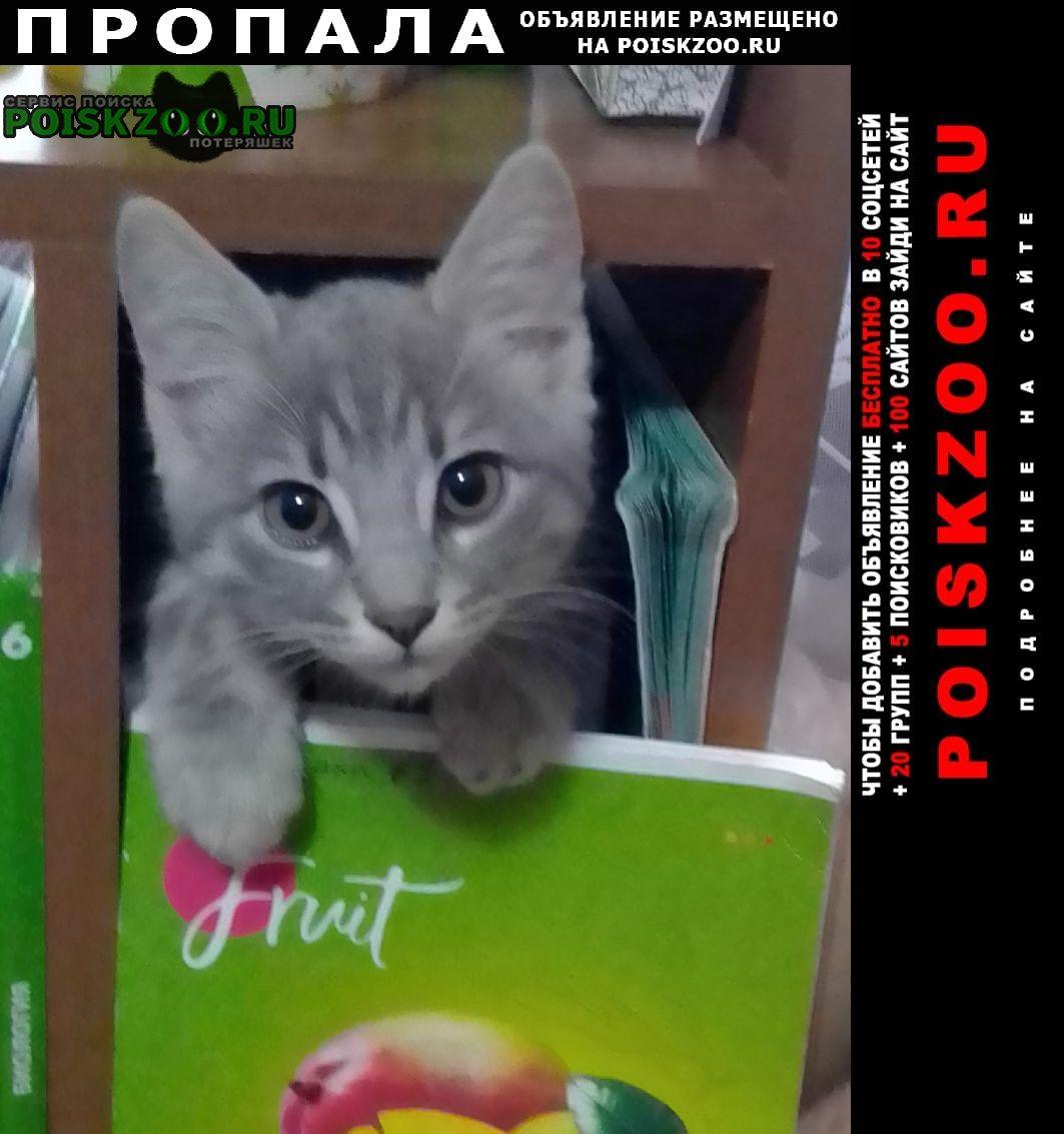 Кострома Пропал кот