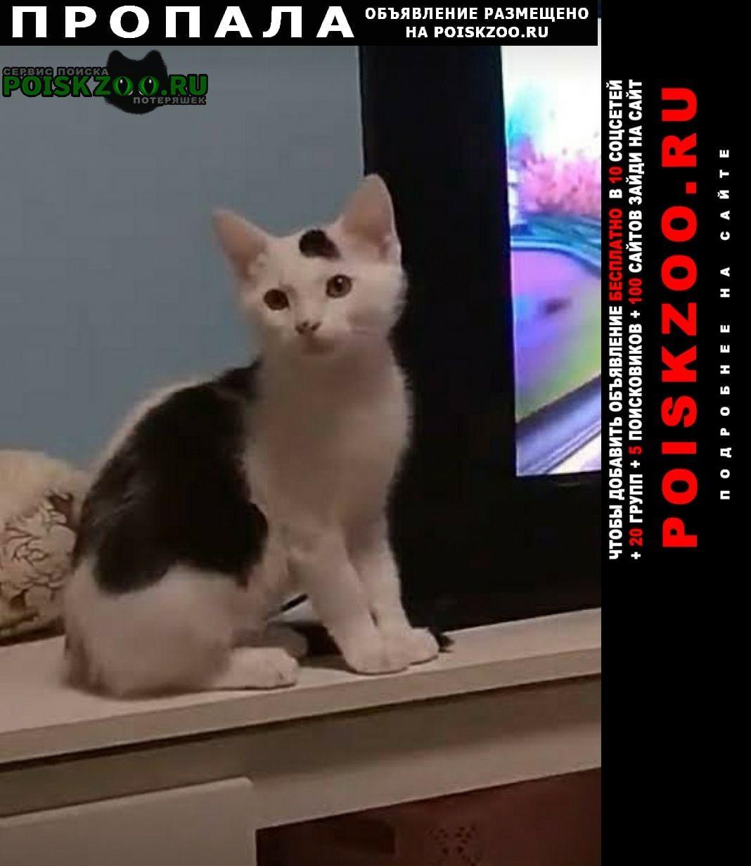 Пропал кот черно-белый Раменское