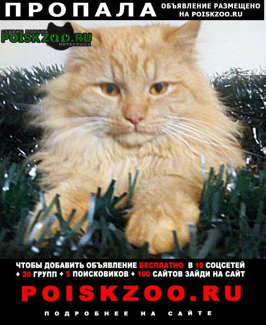 Пропал кот рыжий Нижний Тагил