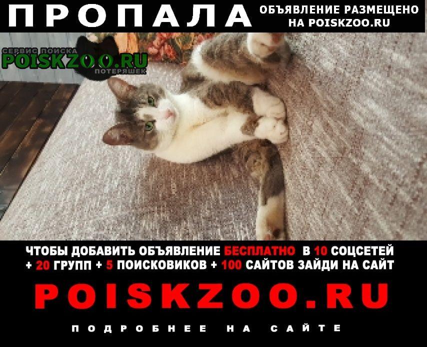 Красногорск Пропал кот