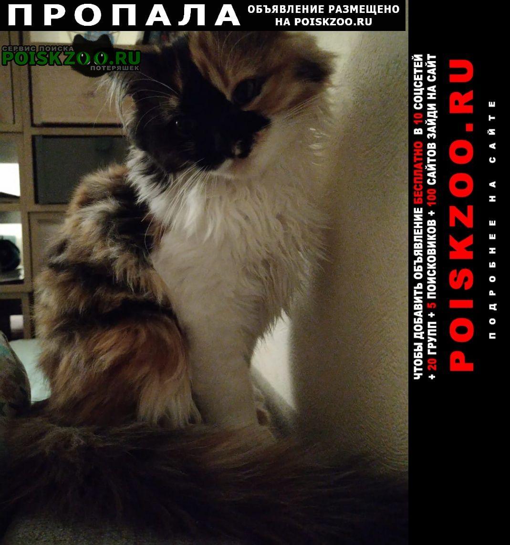 Москва Пропала кошка кошечка, породы экзот. помогите