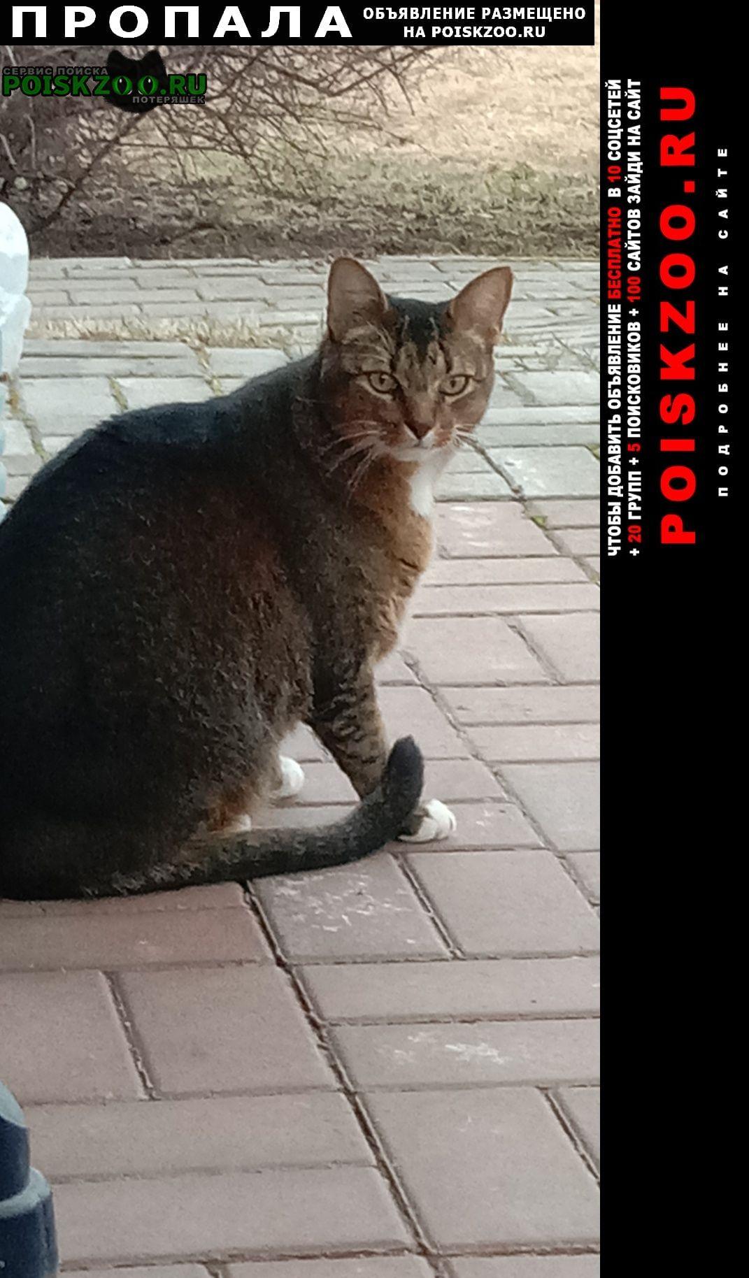 Пропала кошка в новосаратовке Санкт-Петербург