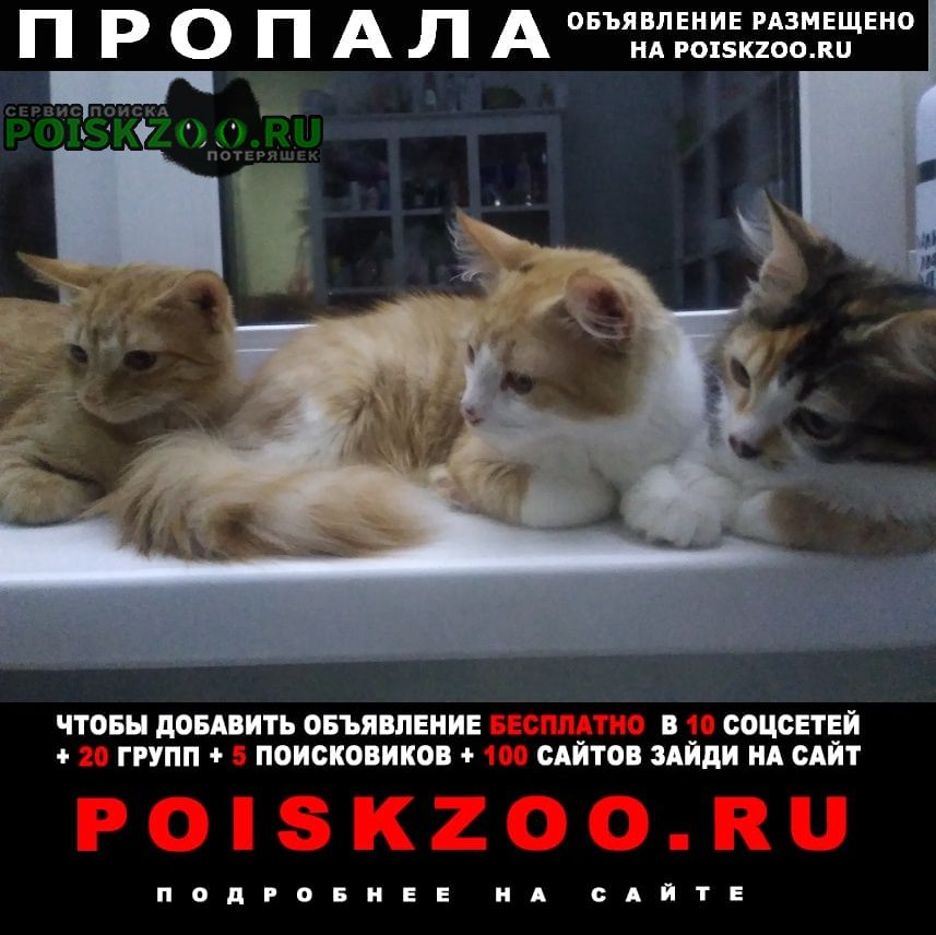Пропала кошка 6месячные Тольятти