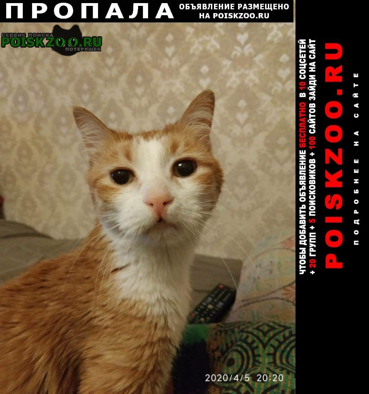 Пропал кот рыжий не больного размера Москва