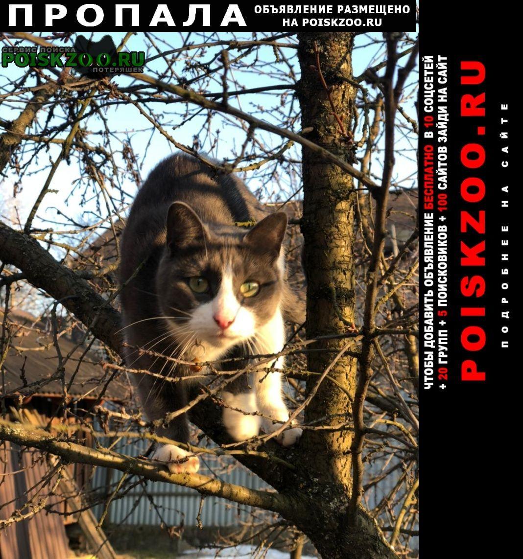 Пропала кошка анфиса Опалиха