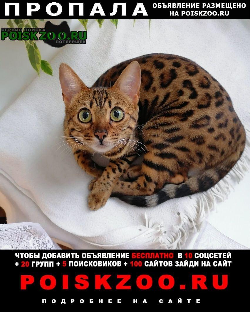 Троицк Пропала кошка