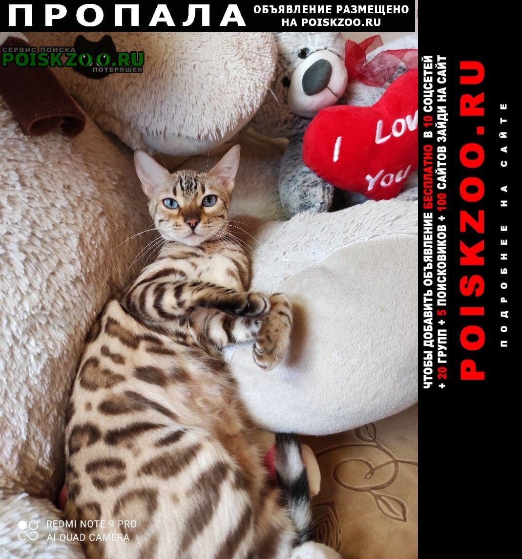 Пропала кошка бенгальской породы Пермь