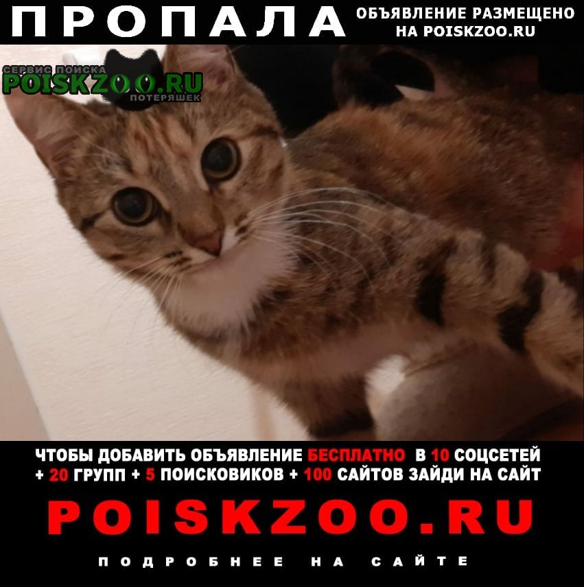 Альметьевск Пропала кошка убежала