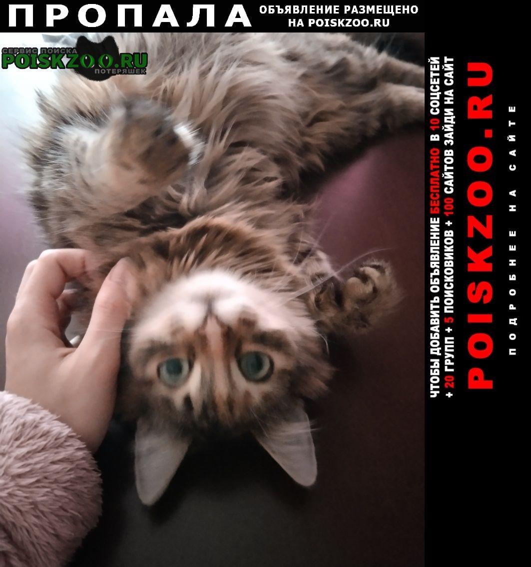 Пропала кошка Щелково