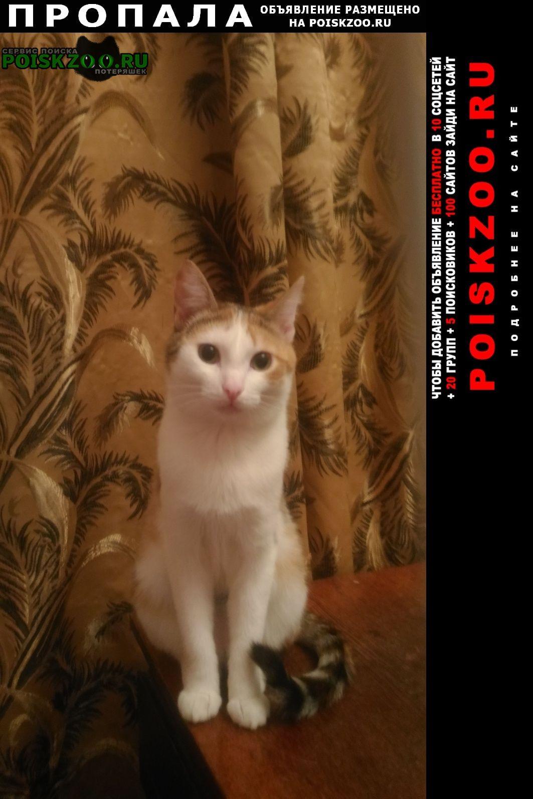 Пропала кошка просим помощи Троицк Челябинская обл.