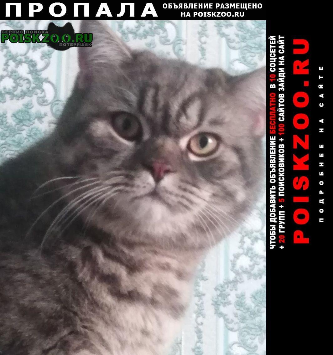 Пропал кот Прокопьевск
