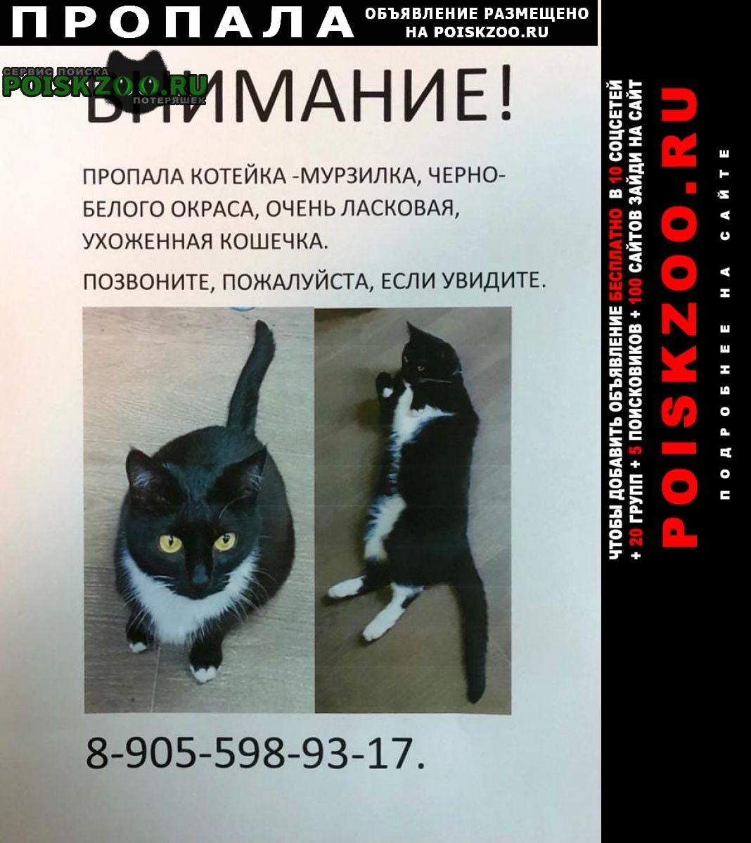 Москва Пропала кошка черно-белого окраса, жёлтые глаза
