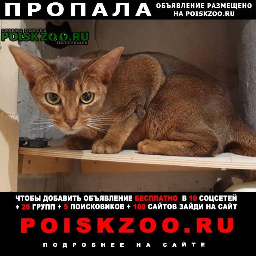 Пропала кошка абиссинская в д.ярцево (шишкин лес) Москва
