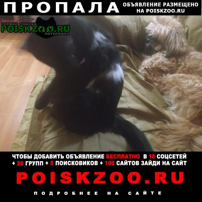 Казань Пропал кот