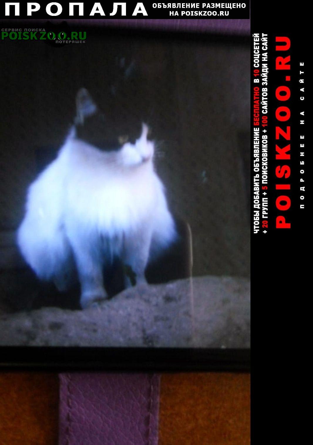 Пропала кошка кличка:маша, окрас: бело-черный Москва