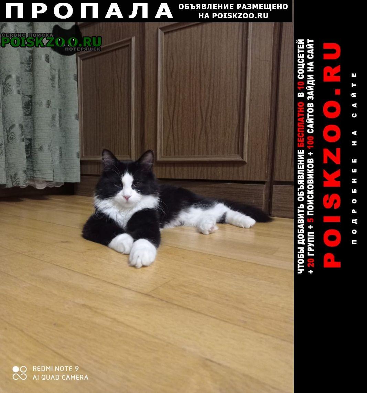 Пропал кот Люберцы