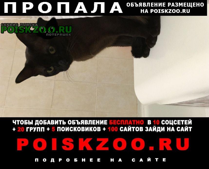 Пушкино Пропал кот