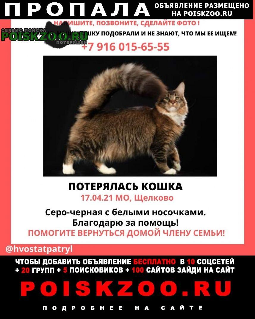 Пропала кошка мейн-куна Щелково