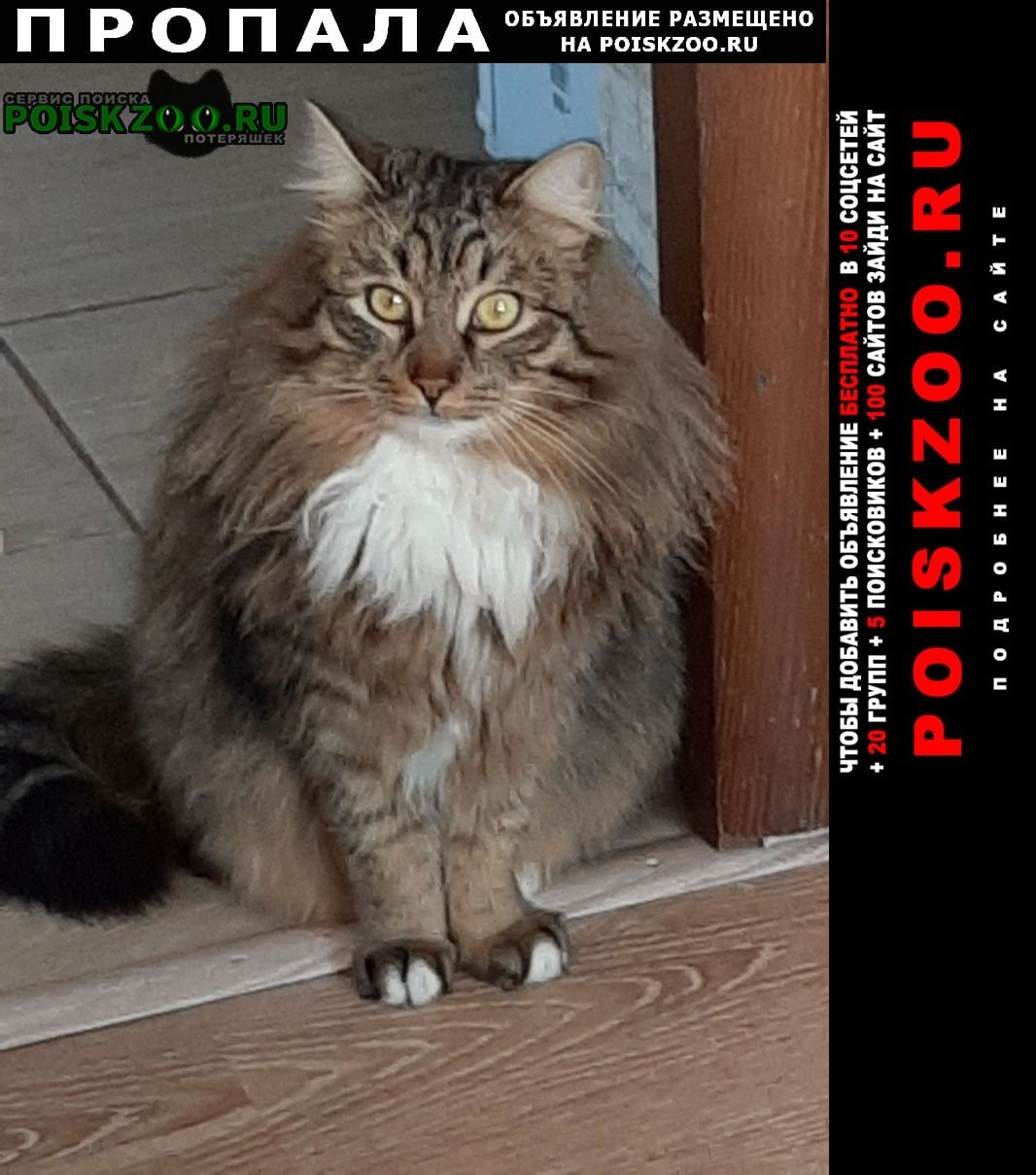 Щекино Пропал кот