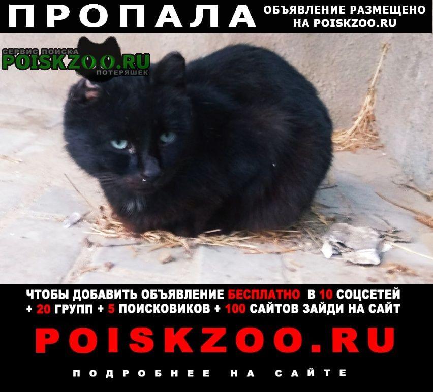 Пропал кот крупный черный без ушей Москва