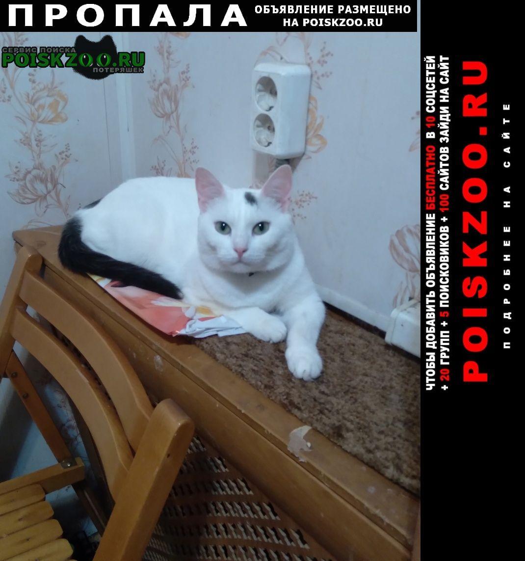Пропала кошка Рыбинск