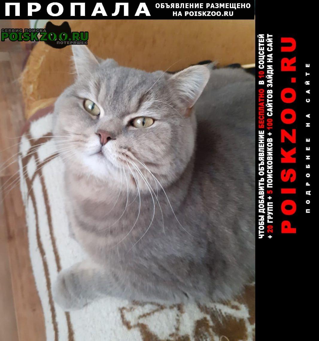 Пропал кот, автовокзал Саратов