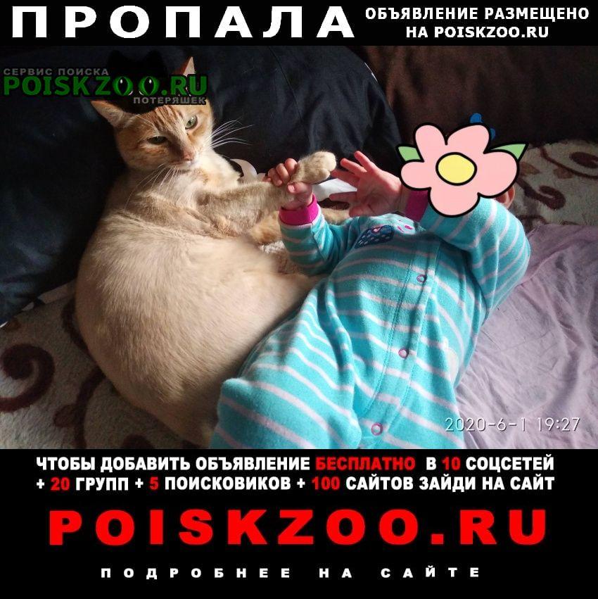 Пропал кот рыжий Красноярск