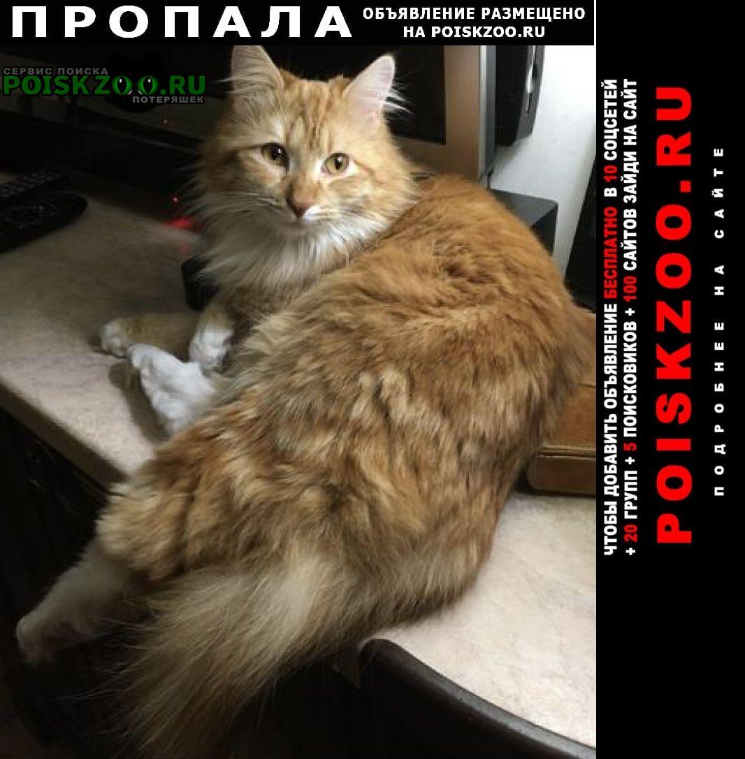 Малаховка Пропал кот