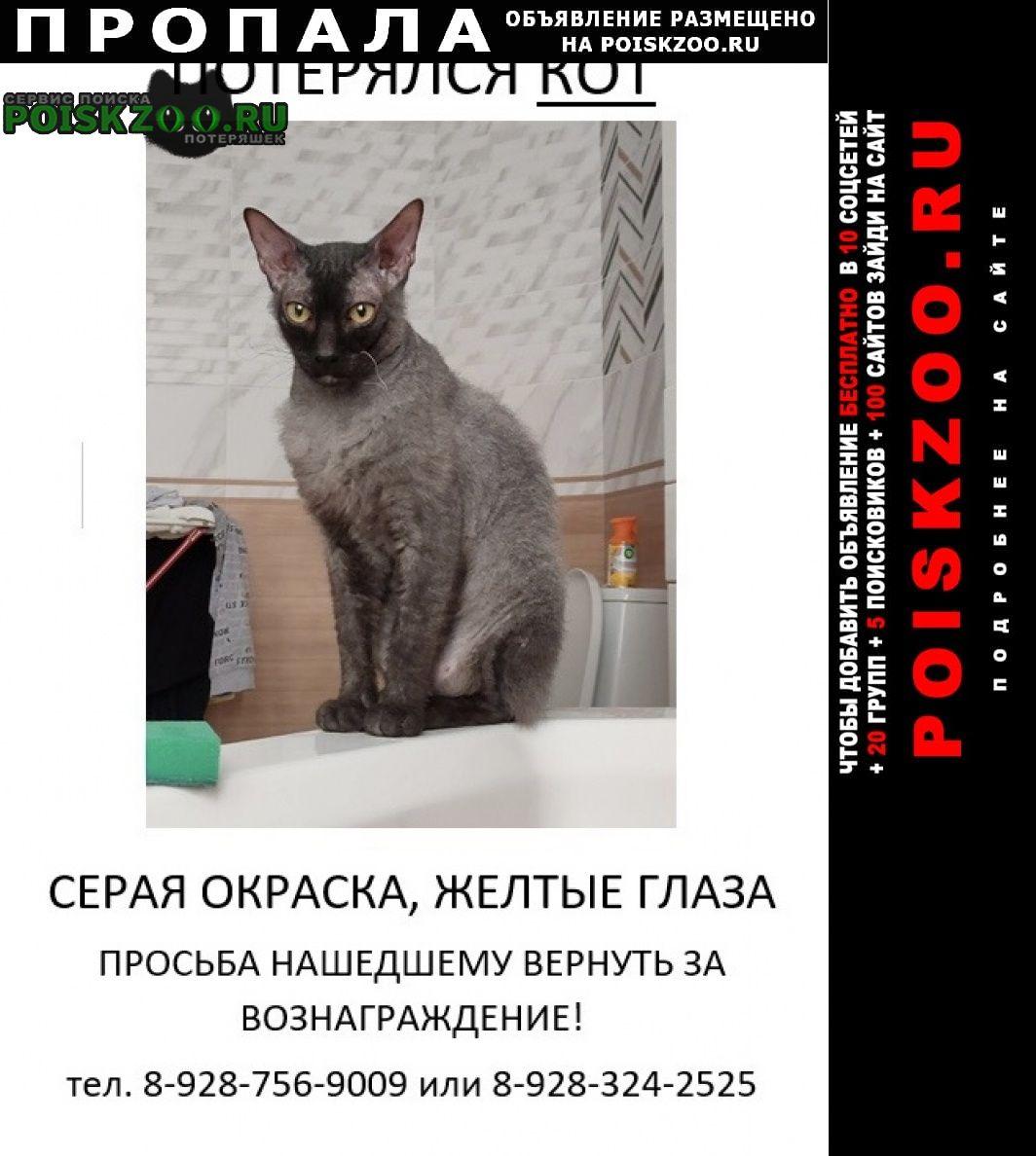 Ставрополь Пропал кот район чапаевки