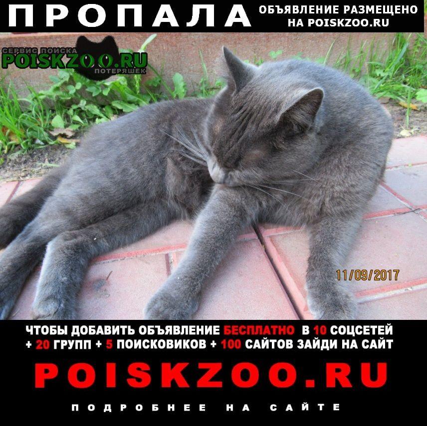 Санкт-Петербург Пропал кот русская голубая