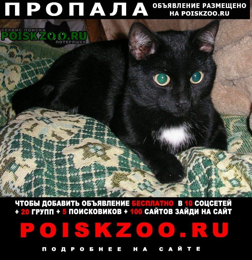 Омск Пропал кот ик