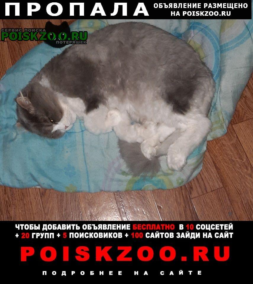 Пропал кот вознагрожение Новороссийск
