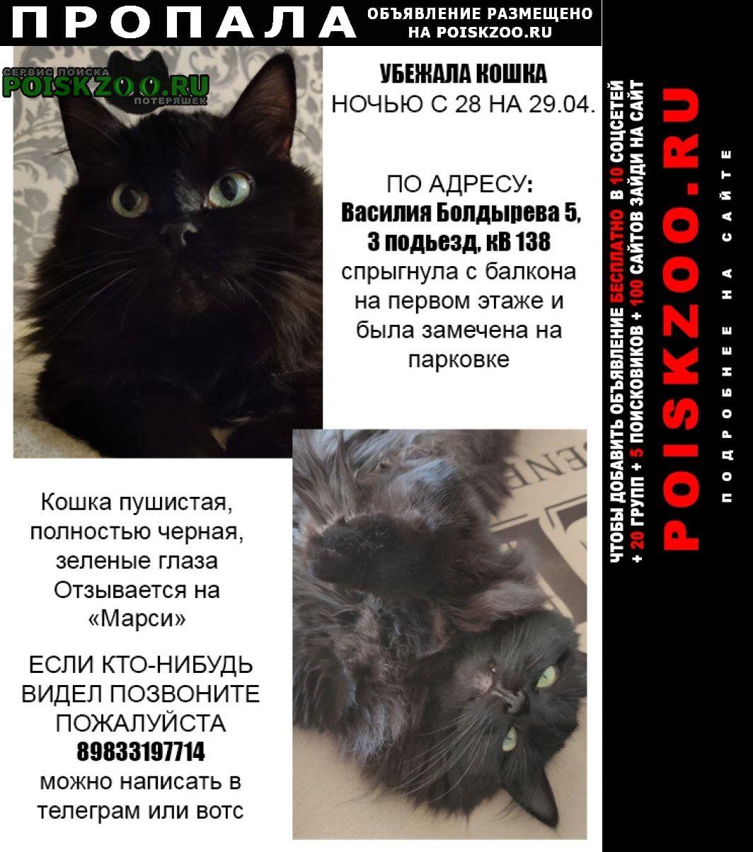 Пропала кошка в ночь с 28.04 на 29.04 Томск