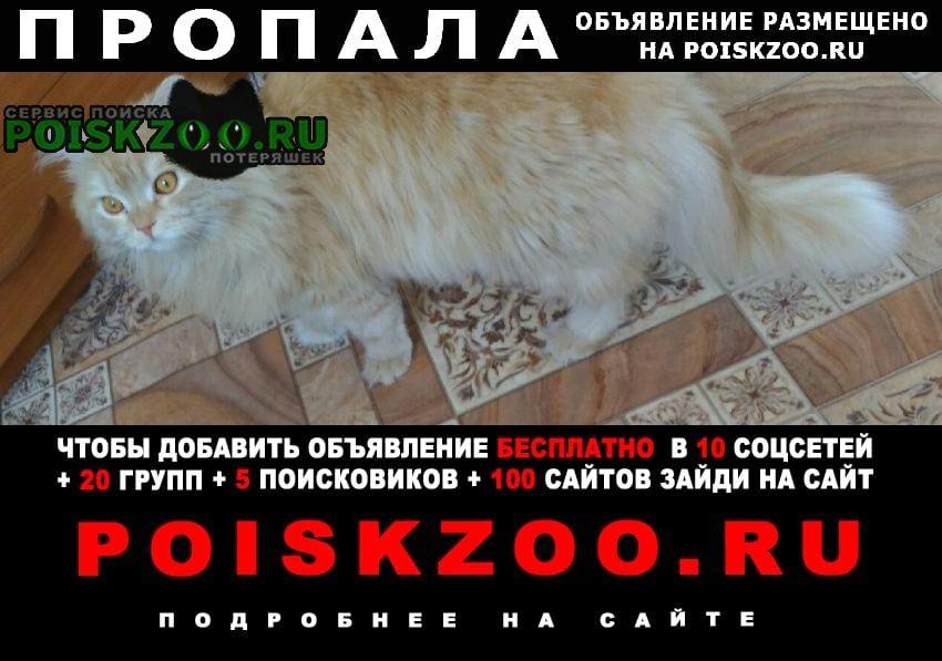 Пропал кот.г. Екатеринбург