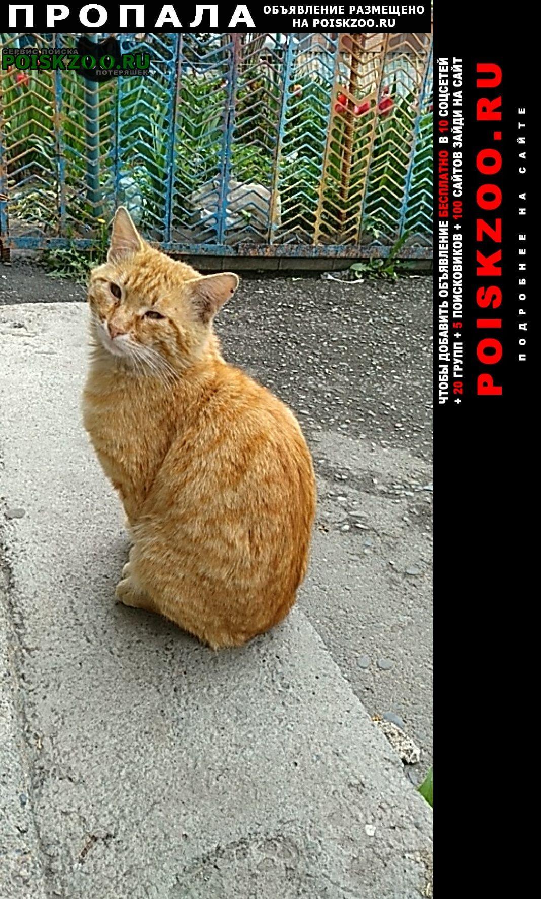 Беслан Пропал кот рыжий