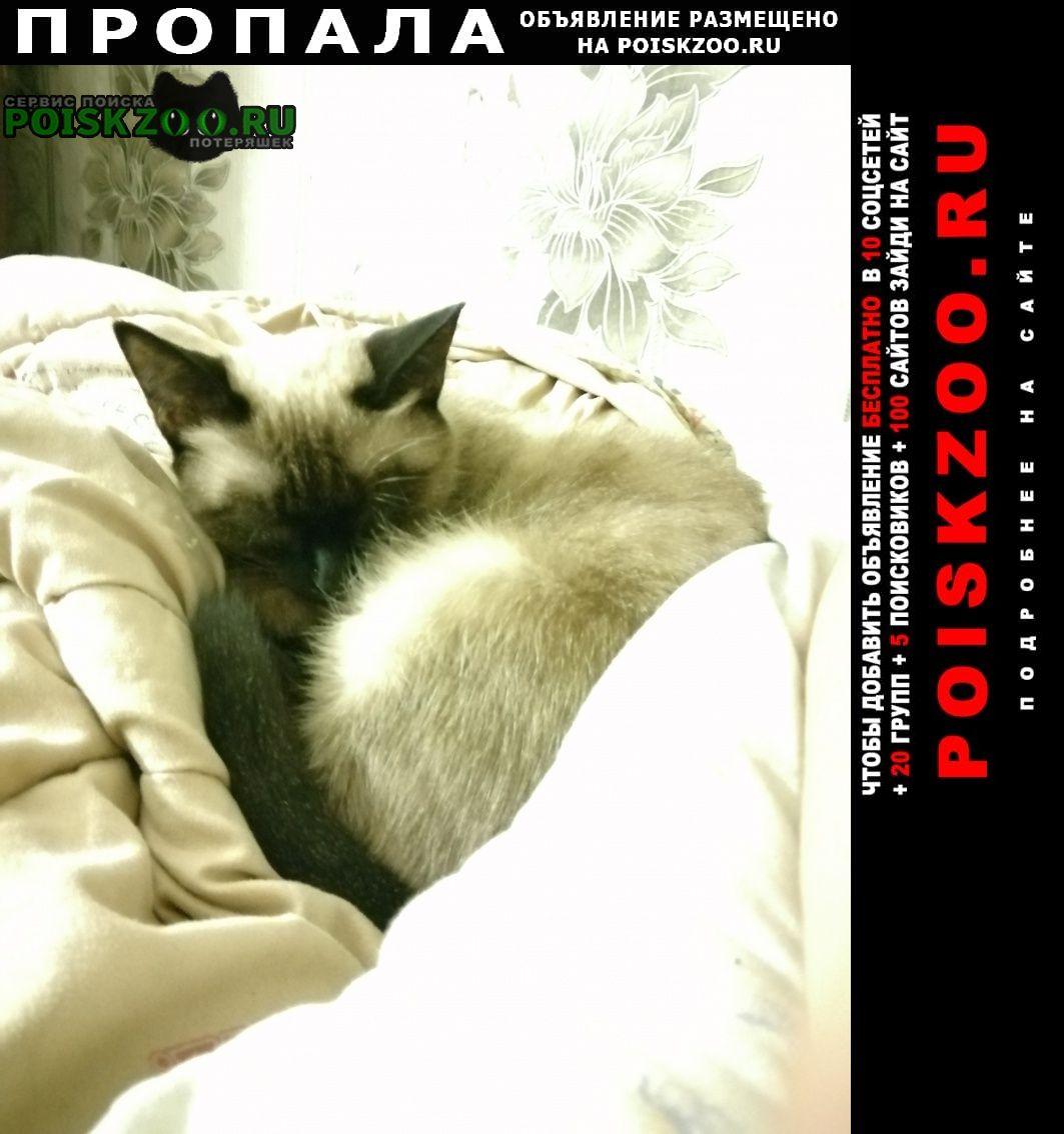 Уральск Западно-Казахстанская обл. Пропала кошка пожалуйста. помогите.