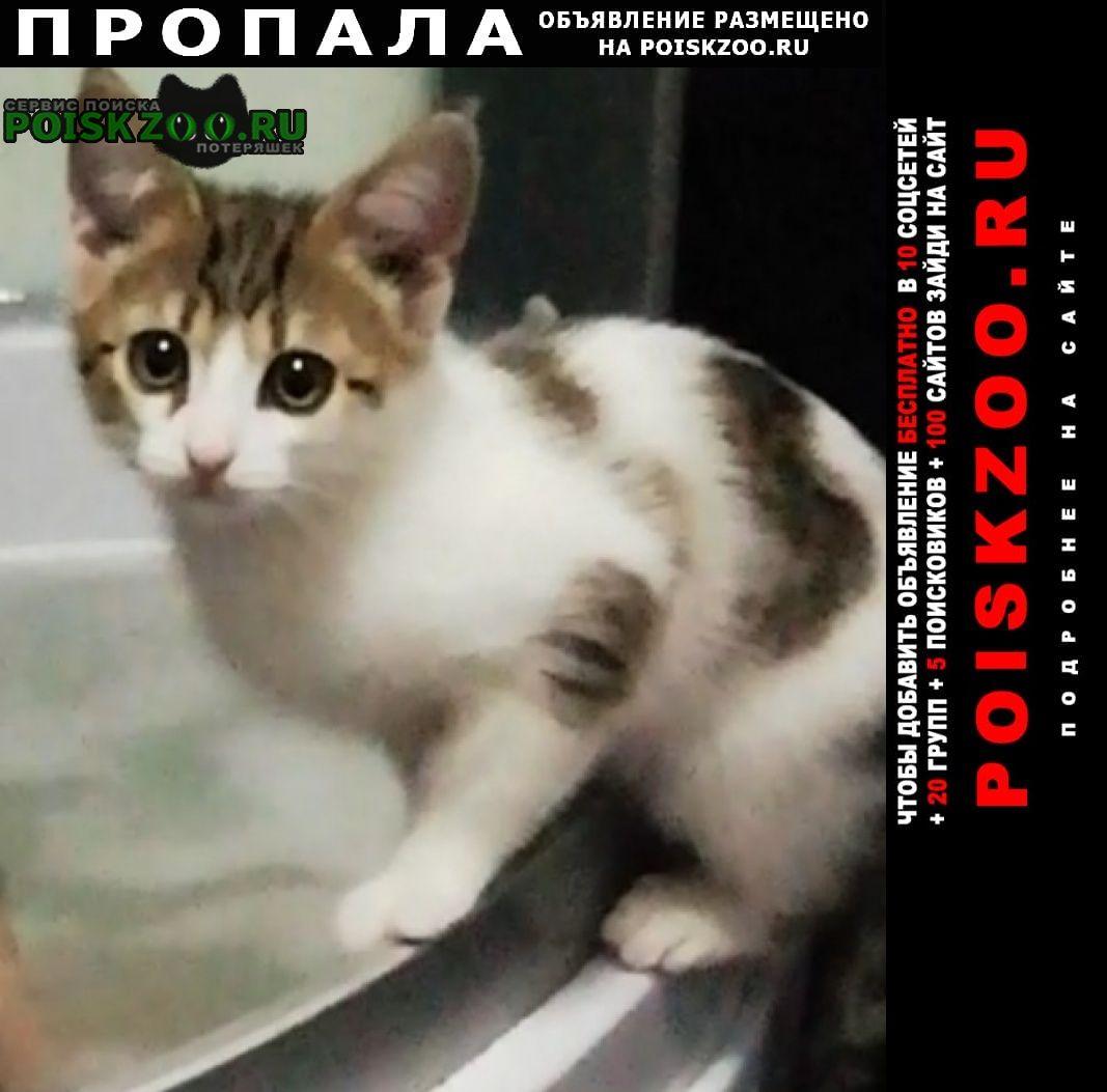 Пропал котик 5 месяцев на ворошиловском Нижний Новгород