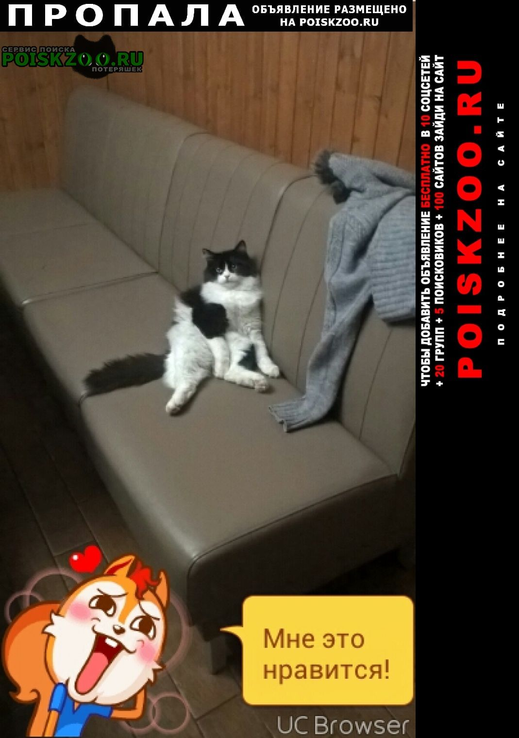 Пропал кот 20 апреля 2021 Тула