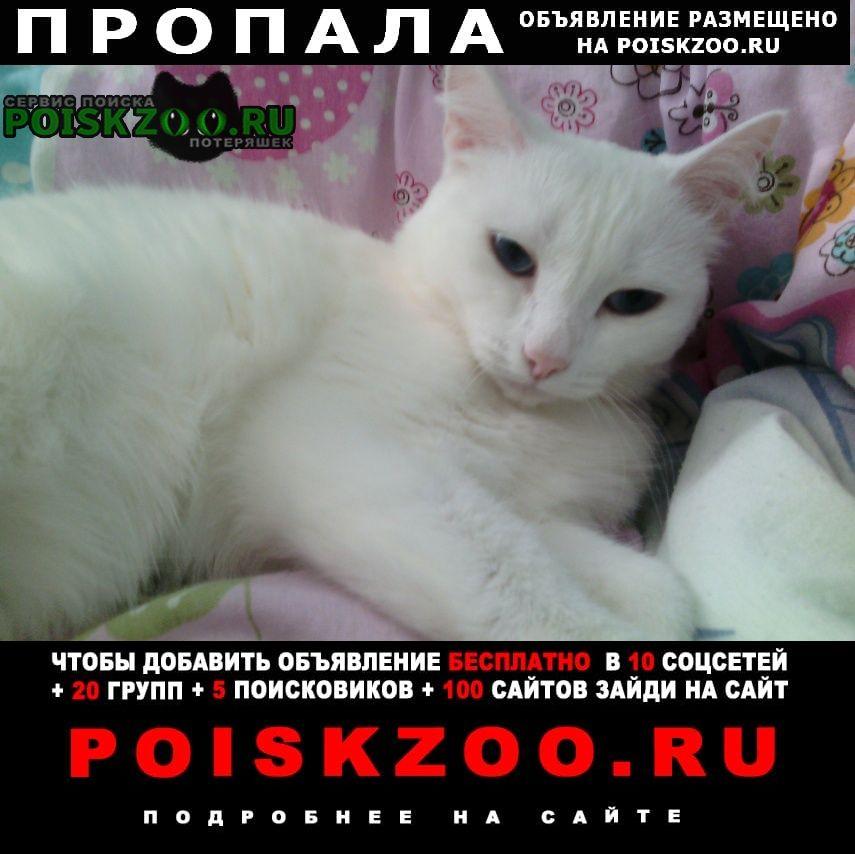 Каменск-Уральский Пропала кошка