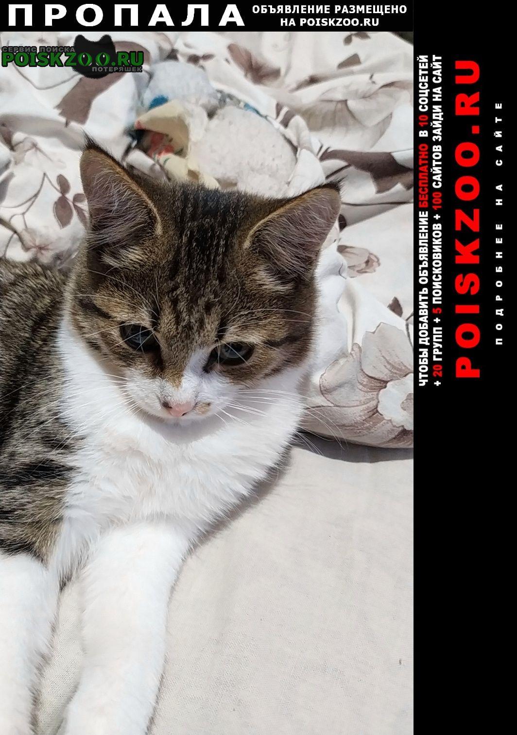 Горно-Алтайск Пропал кот