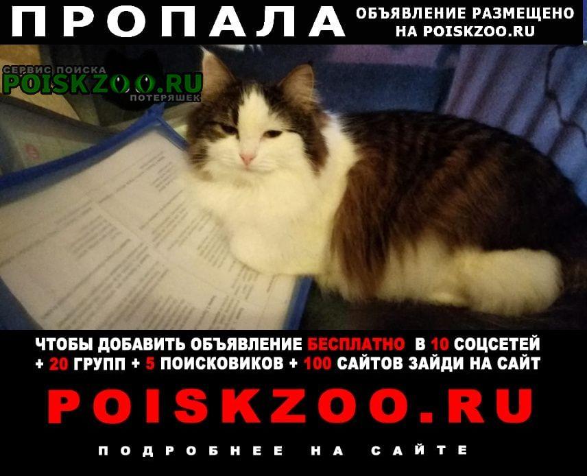 Пропала кошка сибирская Рязань
