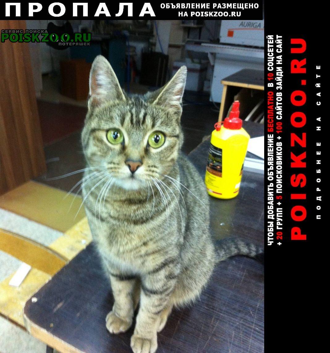 Мурманск Пропала кошка домашняя муся 8 лет